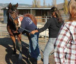 Melding with Equus Foundational Hands-on Clinic