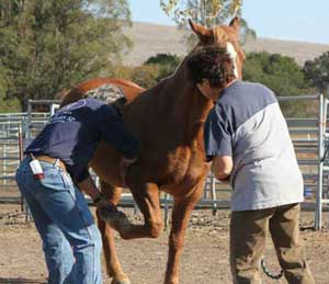 Integrated Equine Therapies clinic