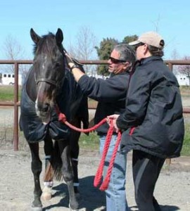 Equine Therapy Courses