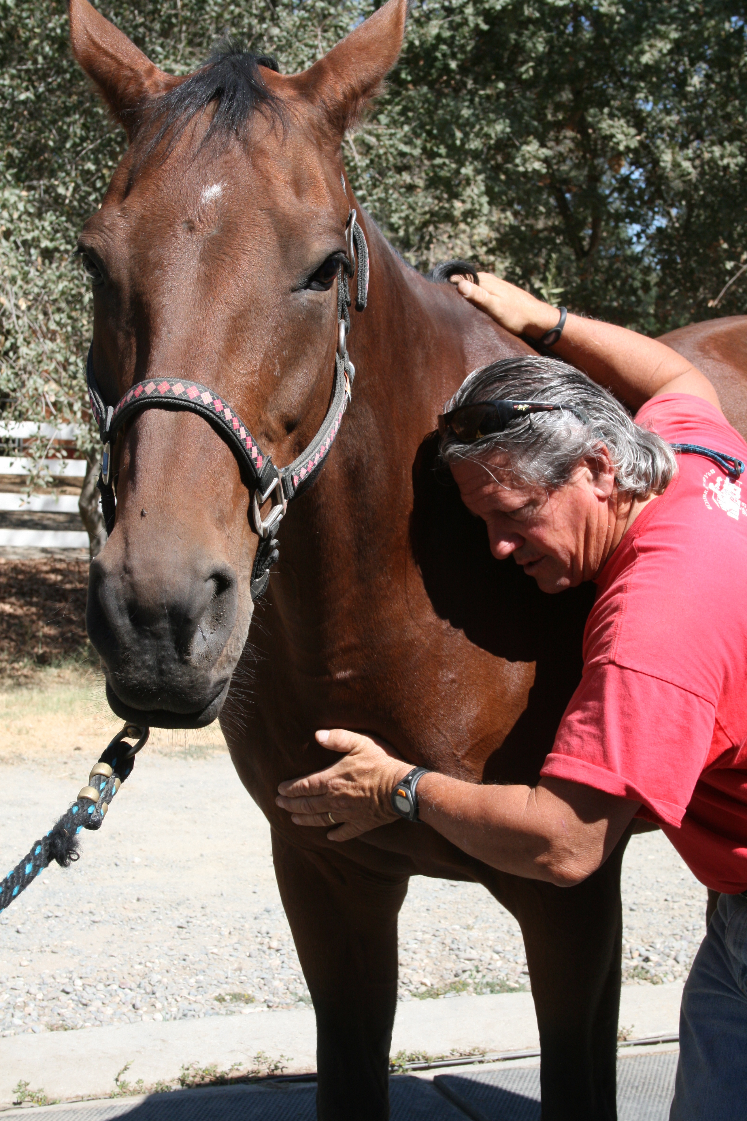 Level 2 - Module 3 (IET EQ CST 3)  Equine Craniosacral 3 Diaphragmatic Unwinding & Somato Emotional Release (SER) Ventura, CA Jan 15-17, 2021 (*Rain Date May 7-9, 2021)