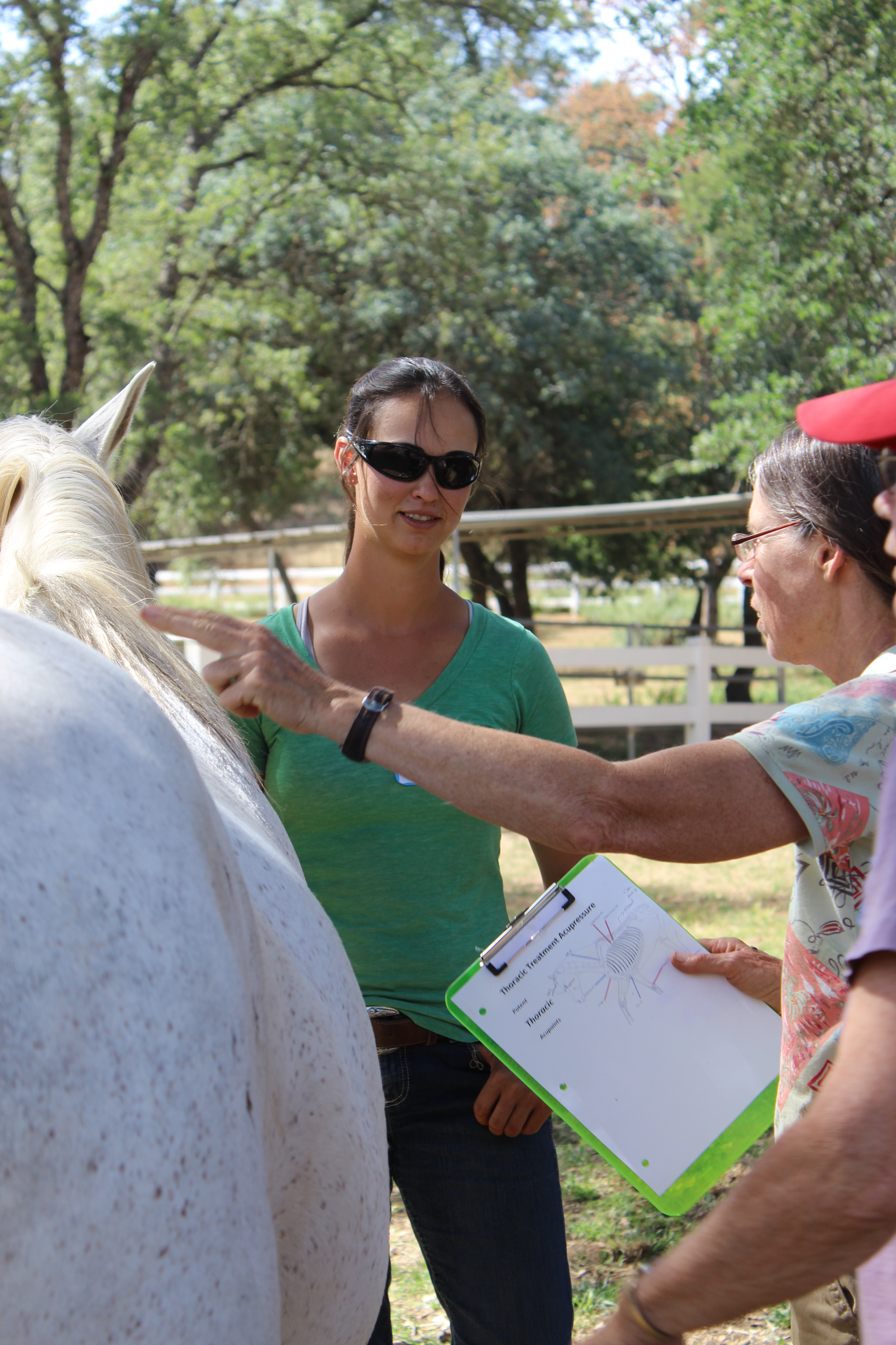 Level 1 (IET CERT- EFT)  Certification – Equine Foundational Therapy Techniques
