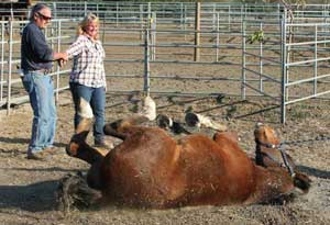 Level 3 (IET OSTEO CERT) Certification, Tom Mayes ~ IET ~ Advanced Equine Osteopathic Techniques
