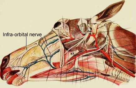 (IET EQ OSTEO2)  Cranial & Cervical -Aug 17-19, 2018 - Galt, CA